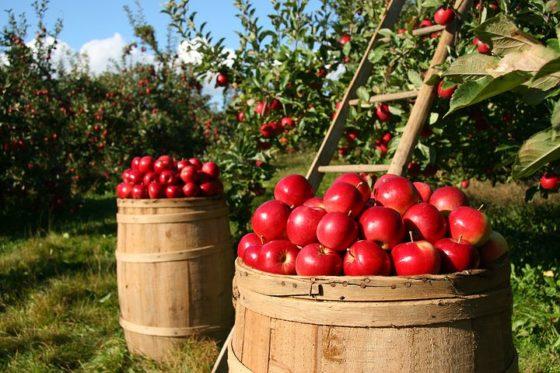 Europese voedselketen schreeuwt om zekerheid  vanwege naderende Brexit