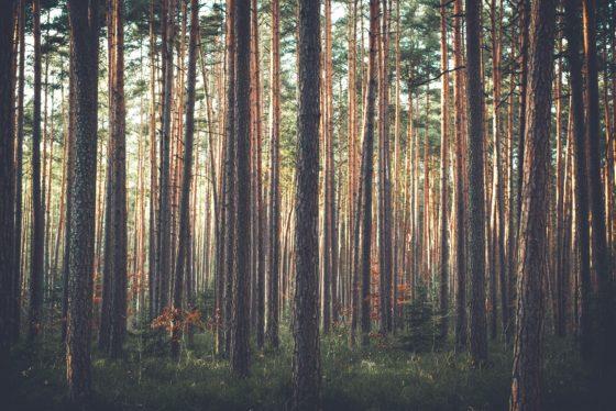 Nestlé zet satellietwaarneming in om ontbossing tegen te gaan