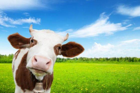 Betere benutting bronnen, kans voor dierlijke eiwitproductie