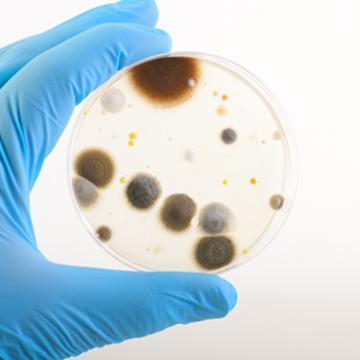 7 feiten die de huidige desinfectie op de proef stellen