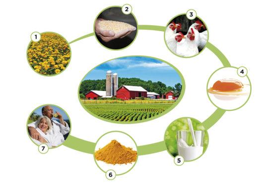 Food Future Event: hoe technologie de keten transformeert