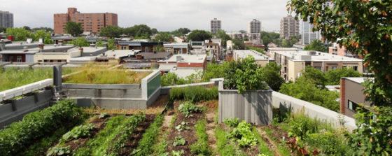 Foire de Libramont: Wie zal onze steden morgen voeden?
