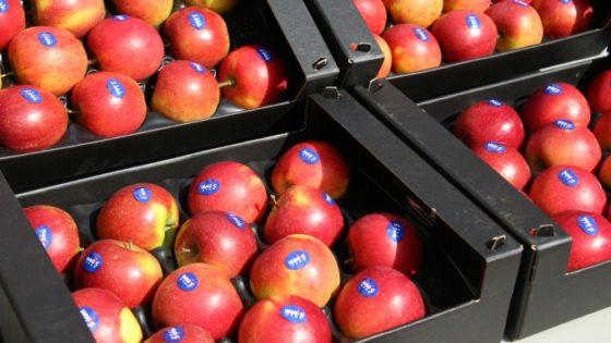 Colruyt Group innoveert met nieuwe appelsoorten