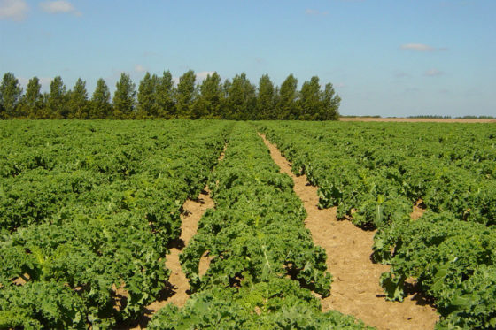 Unieke samenwerking agrovoedingssector