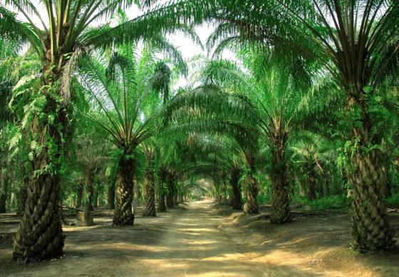Belgische Alliantie voor Duurzame Palmolie realiseert belangrijke doelstelling