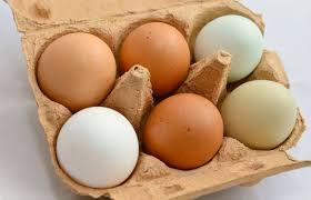FAVV versterkt controle fipronil in eieren