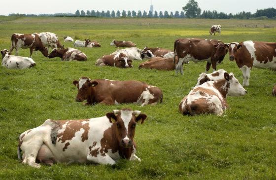 Europese aanpak landbouwcrisis