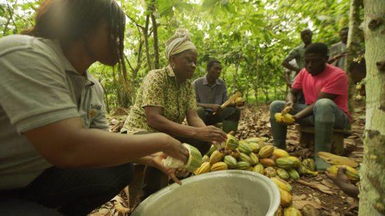 Mondelēz International gaat voor 100% Cocoa Life