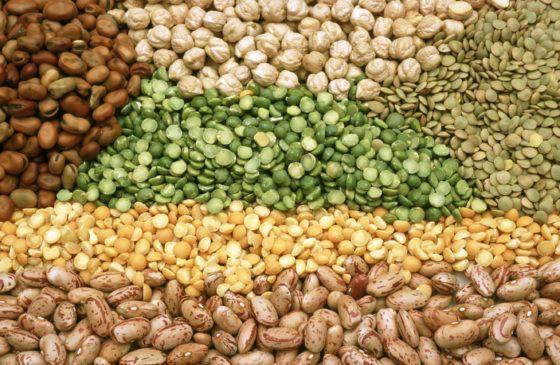 TAPAS-consortium ontwikkelt eiwitrijke voeding