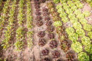 Nieuwe bioverordening in beeld