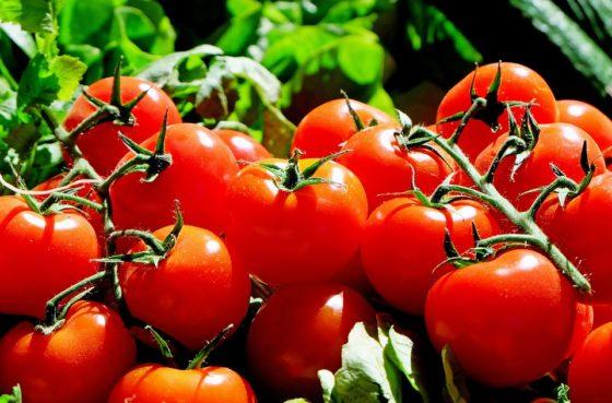 Duurzame Belgische tomaat is goedkoper dan Spaanse import