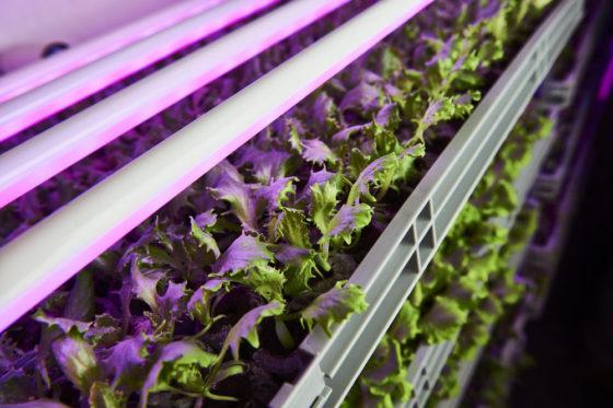 Urban Crop Solutions levert totaaloplossing