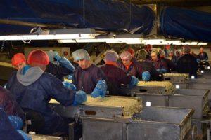 Certificatie efficiëntste tool voor verbetering voedselveiligheid