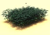 3D-groeimodel soja krachtiger door factor waterbeschikbaarheid