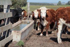 Handelsakkoord met Mercosur bedreigt Europees landbouwmodel
