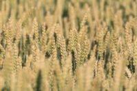 Internationaal Jaar van de Plantengezondheid 2020 focust op belang plantgezondheid