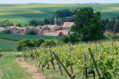 Wijnproductie 2018 verdubbelde door warme zomer