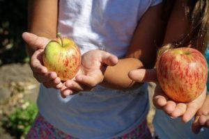 Vlaamse jongeren eten beter maar bewegen te weinig